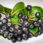 Żywy ocet z aronii (2)